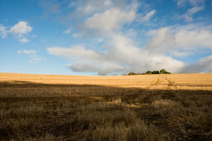 Fields in fall